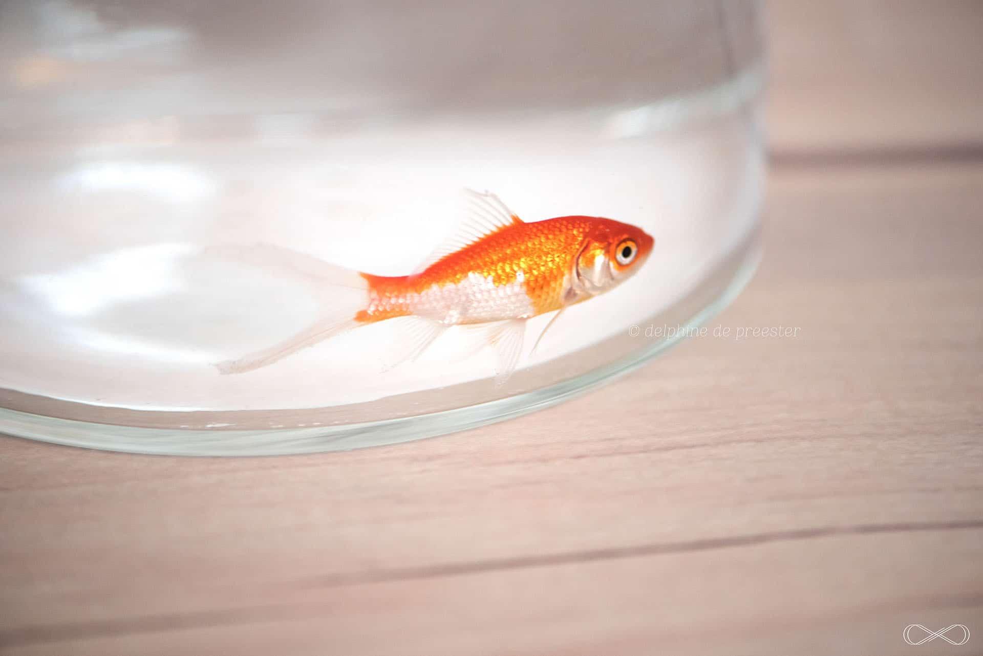 photographe enfant avec poisson rouge paris