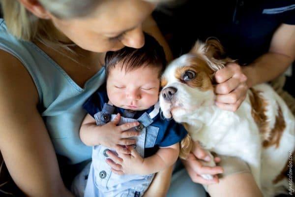 calin entre un chien et un nouveau-né